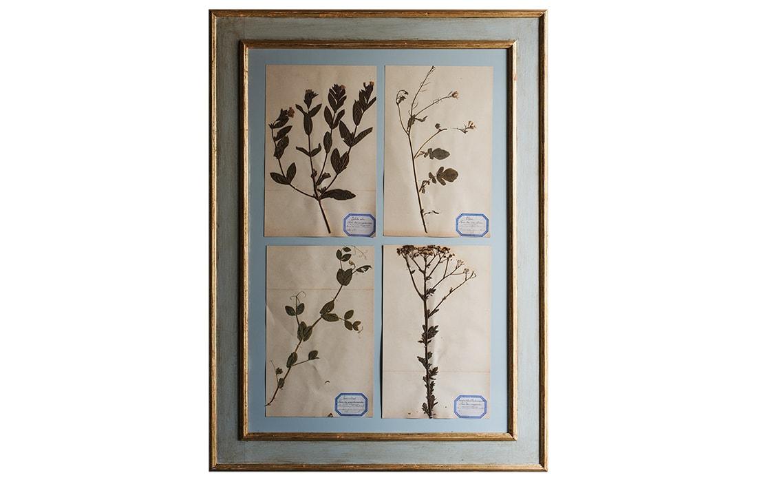 H12-Botanicals-Elusio-Antique-Design-products.jpg