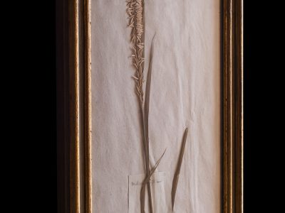H13-Botanicals-Elusio-Antique-Design-product-10.jpg
