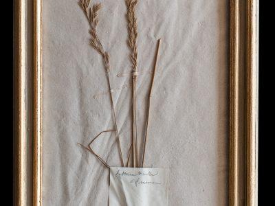 H13-Botanicals-Elusio-Antique-Design-product-14.jpg