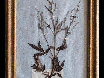 H14-Botanicals-Elusio-Antique-Design-product-5.jpg