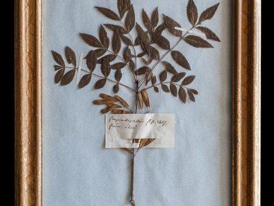 H14-Botanicals-Elusio-Antique-Design-product-6.jpg