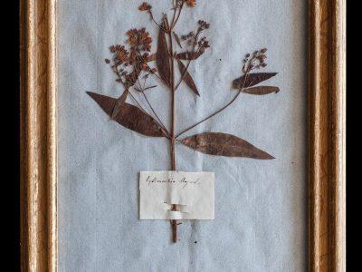 H14-Botanicals-Elusio-Antique-Design-product-8.jpg