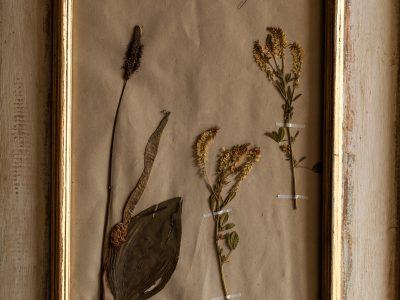 H15-Botanicals-Elusio-Antique-Design-product-5.jpg