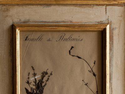 H15-Botanicals-Elusio-Antique-Design-product-9.jpg