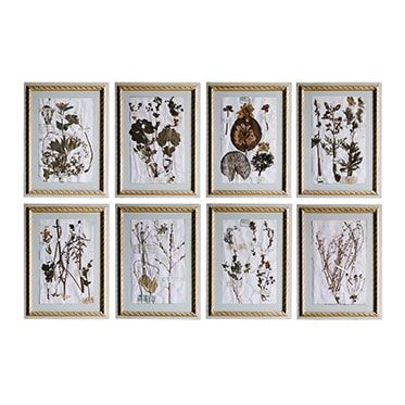 REF : H18 XIX TH C. BOTANICALS, BEIGE FRAME WITH GILDED RUBAN