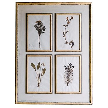 REF : H19 XIX TH C. BOTANICALS ENFRAMED