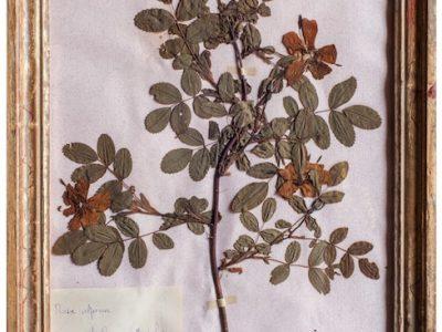 H4-Botanicals-Elusio-Antique-Design-product-1.jpeg