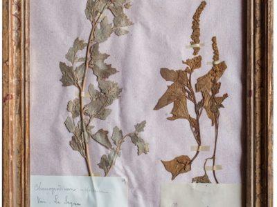 H4-Botanicals-Elusio-Antique-Design-product-2.jpeg