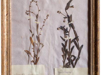 H4-Botanicals-Elusio-Antique-Design-product-3.jpeg