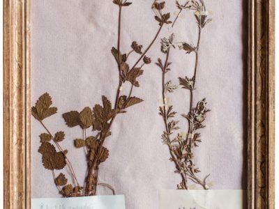 H4-Botanicals-Elusio-Antique-Design-product-6.jpeg