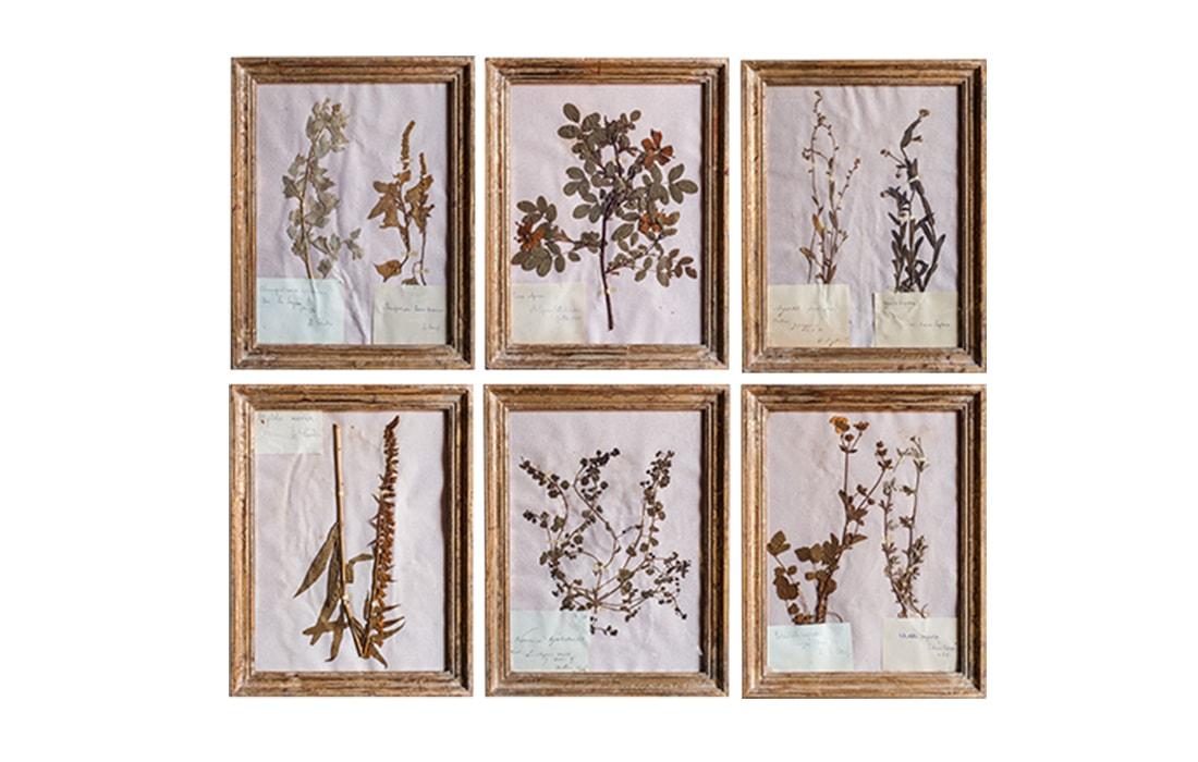 H4-Botanicals-Elusio-Antique-Design-product.jpg