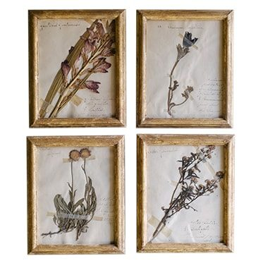 REF : H9 XIX TH CENTURY SMALL BOTANICALS GILDED FRAME