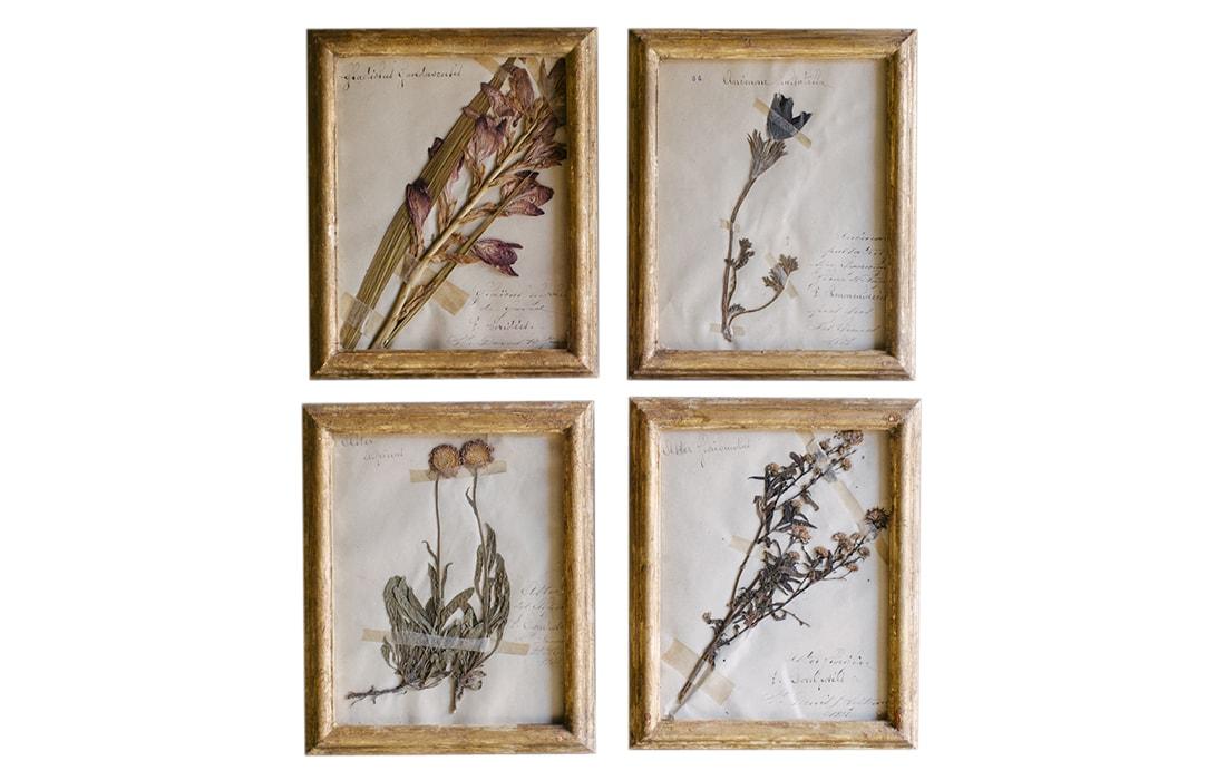 H9-Botanicals-Elusio-Antique-Design-product-2.jpg