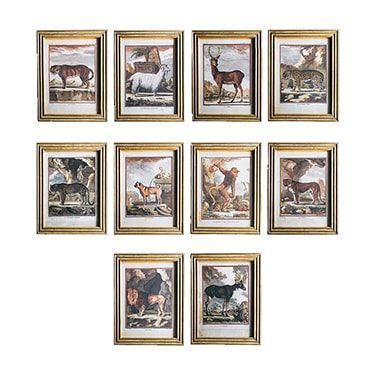 REF : G7 LARGE ANIMALS FROM BUFFON, BEIGE AND GOLD CARVED FRAME