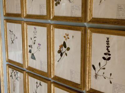 H21-Botanicals-Elusio-Antique-Design-product-2.jpeg