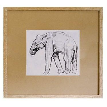 REF : G72 ELEPHANT