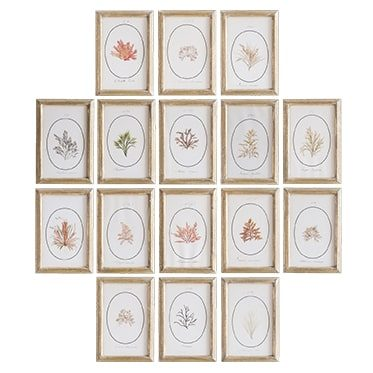 REF : H16, 16 SMALL PRINTED SEAWEED  GILDED FRAME